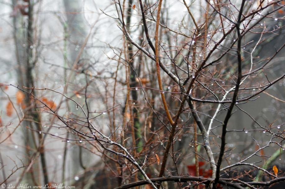 Honeysuckle Trail Rain Drops