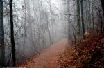 Hot Springs Mountain Trail Fog