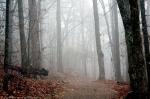 Short Cut Trail Fog
