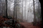 Short Cut Trail Fog