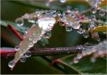 Tufa Terrace Rain Drops