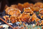 HSNP Sunset Trail Fordyce Estate Colorful Fungi