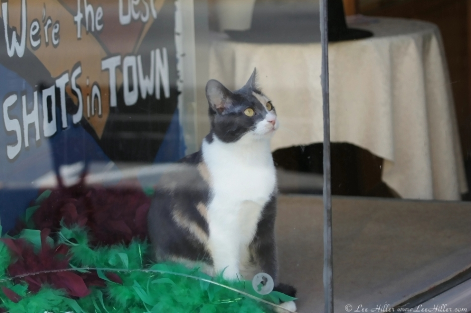 Central Avenue Cat In The Window