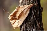 West Mountain Trail Pierced Leaf