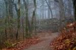 Peak Trail Fog