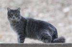 Hot Springs Mountain Peak Trail New Ferral Cat
