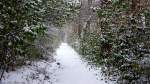 Hot Springs National Park Dead Chief Trail Snow