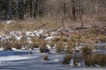 Hot Springs National Park Ricks Pond Marsh Ice Snow