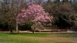 HSNP Arlington Lawn Saucer Magnolia