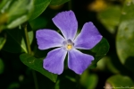 Hot Springs National Park Promenade Periwinkle