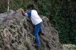 HSNP Arlington Lawn Tufa Rock Climber