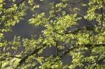 HSNP Promenade Spring Green