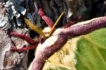 HSNP Fordyce Ricks Pond Luna Moth