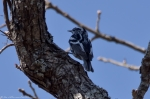 HSNP Sunset Trail Black and White Warbler