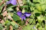 HSNP Floral Trail Wooly Blue Violet