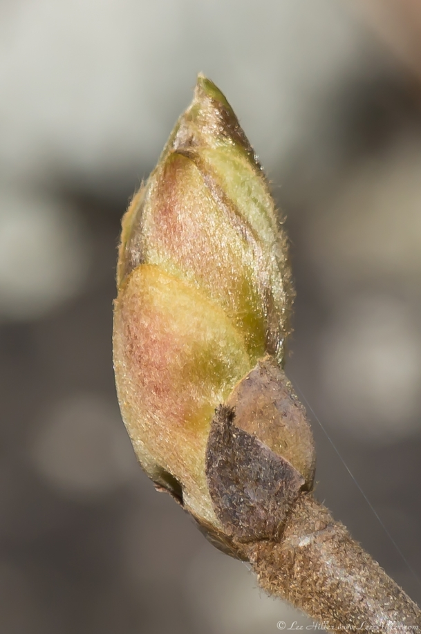 Hot Springs Mountain Trail Spring Leaf Pod