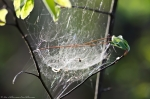 HSNP Peak Trail Spider Web