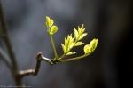 HSNP Peak Trail Spring Leaves