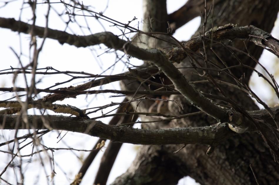 HSNP West Mountain Oak Trail Squirrels
