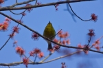 Hot Springs Mountain Road Flowering Tree Pine Warbler
