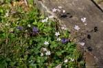 HSNP Hot Springs Mountain Road Wildflowers
