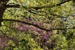 Hot Springs National Park Arlington Lawn Spring Trees