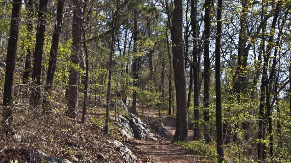 HSNP Short Cut Trail Early Spring