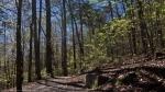 Hot Springs National Park Floral Trail Spring