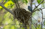 HSNP Floral Trail Tufted Titmouse Nest