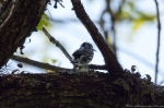 Hot Springs Mountain Road Black & White Warbler