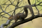 HSNP Tufa Terrace Squirrel
