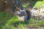 Hot Springs National Park Arlington Lawn Squirrel