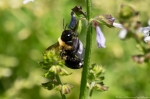 Hot Springs Mountain Rd Carpenter Bee