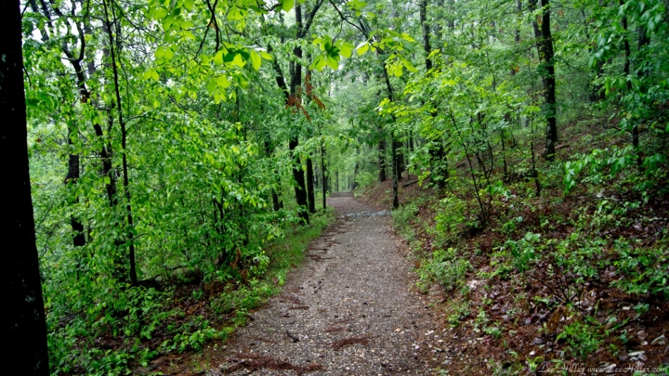 Hot Springs Mountain Trail Earth Day