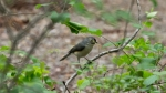 HSNP Hot Springs Mountain Trail Tufted Titmouse