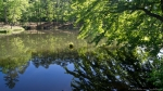 HSNP Fordyce Estate Ricks Pond Spring Reflection