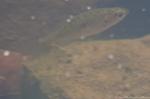 HSNP Fordyce Estate Ricks Pond Spring Longear Sunfish