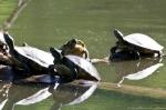 HSNP Fordyce Estate Ricks Pond Spring Turtles