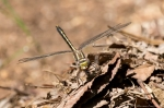 HSNP Fordyce Estate Sunset Trail Snacking Dragonfly