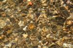 HSNP Floral Trail Creek Pebbles