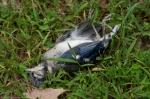 HSNP Hot Springs Mountain Road Dead Young Blue Jay