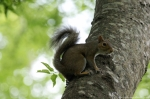 HSNP Tufa Terrace Squirrel in Tree