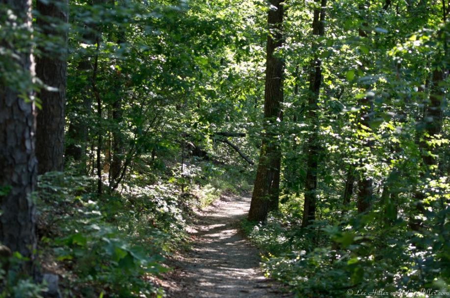 HSNP Upper Dogwood Trail Spring