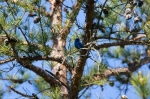 Lake Catherine St Park Horseshoe Trail Blue Grosbeak