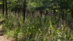 Lake Catherine State Park Horseshoe Trail Wildflowers