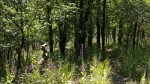 Lake Catherine St Park Horseshoe Trail Spring Wildflowers