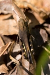 Lake Catherine St Park Horseshoe Trail Yellow-Wing Locust