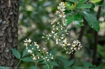 HSNP Dead Chief Trail Flowering Bush