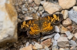 HSNP Hot Springs Mountain Road Orange Yellow Butterfly