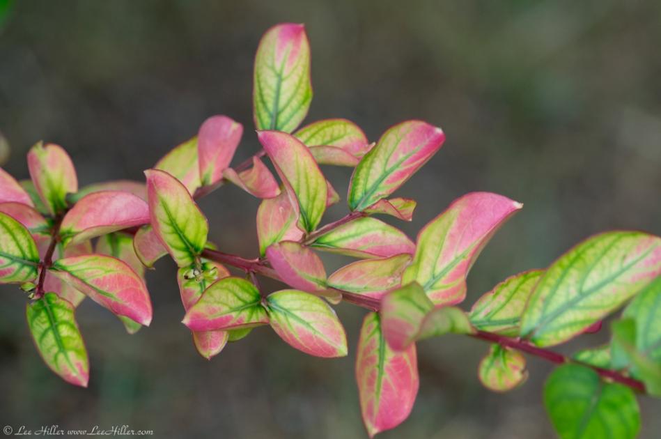 HSNP Tufa Terrace Trail Pink Green Leaves